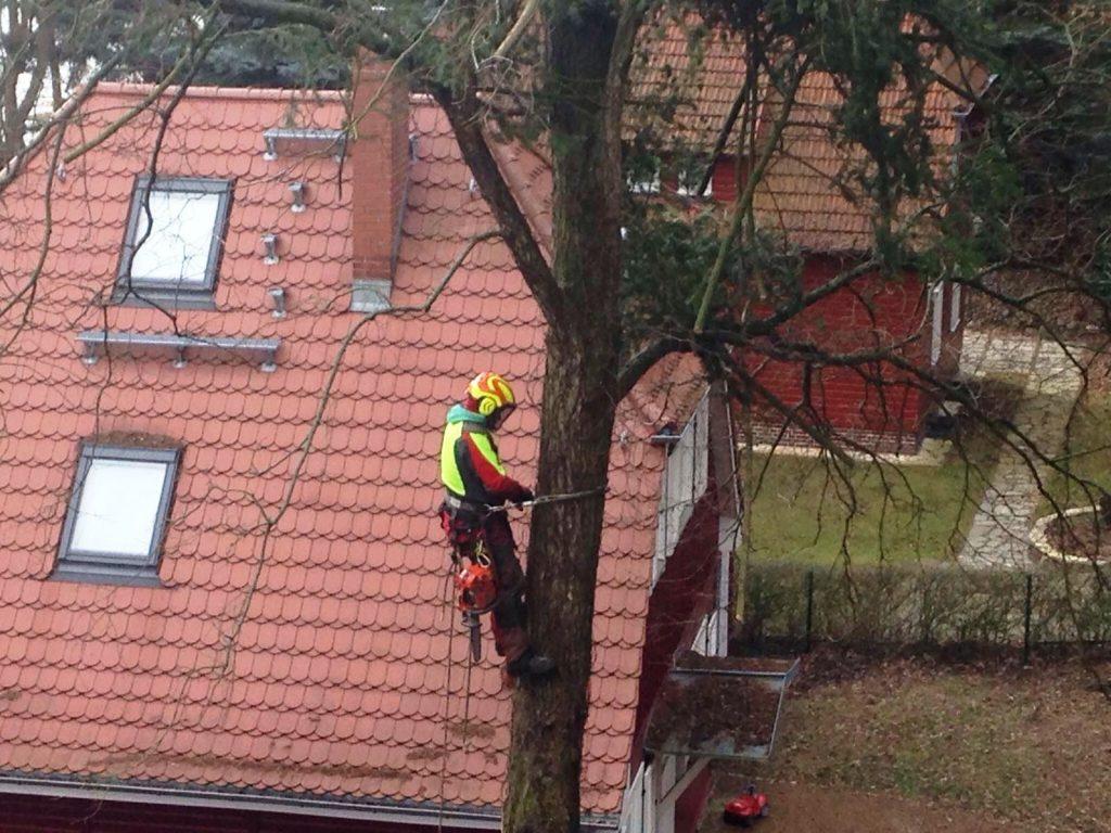 Baumkletterer vom Hubsteiger