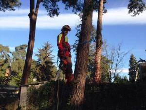 Baumkletterer beim Aufstieg