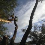 Baumfällprofi im Korb