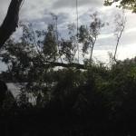 Baumkrone am Seil